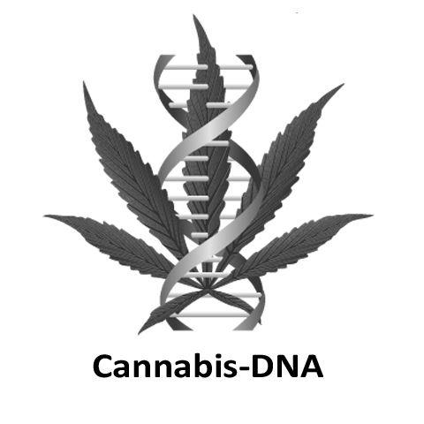 Cannabis-DNA (fig.))